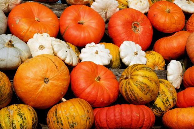 pumpkins-2714744_1920